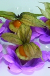 doce-physalis